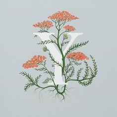 Charlotte Day botanical alphabet.