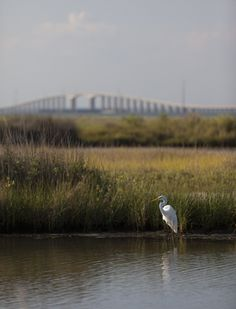Dauphin Island. Although the island has several bird sanctuaries, the main one is the 164-acre Audubon Bird Sanctuary. Dauphin Island is the first landfall encountered by many birds as they migrate north from South America, and as a consequence many species can be found resting there before continuing their journey.