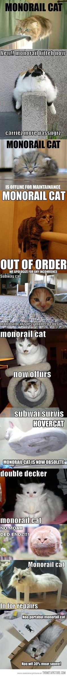 I love this funny cat #funnycatmeme #funnycats #cats find more funny cats here http://www.funnycatsblog.com