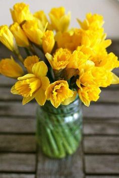 Big yellow daffodils are my favorite!Big yellow daffodils are my favorite! List Of Flowers, Yellow Flowers, Spring Flowers, Beautiful Flowers, Daffodil Bulbs, Daffodils, Narcisse, Mother Plant, Birth Flowers