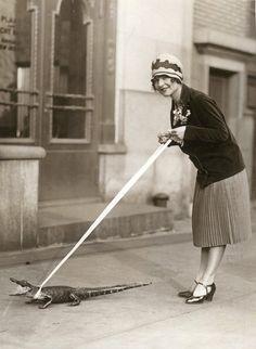 1920s pet alligator