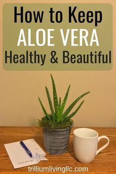 ing a few easy care tips, Aloe vera will be a beautiful addition to your succulent collection. Having it in your home is a great way to naturally treat burns and skin irritations. Gardening For Beginners, Gardening Tips, Aloe Plant Care, Easy Plants To Grow, Organic Gardening, Indoor Gardening, Indoor Plants, Urban Gardening, Gardening