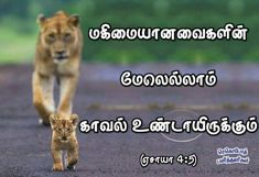 """""""There will be a covering over eyeryone for protection"""" - (Isaiah Isaiah 4, Psalms, Psalm 18 28, Tamil Bible Words, Blessing Words, Jesus Photo, Christian Verses, Bible Verses, Singer"""