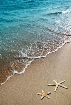 -estrella-de-mar-en-una-arena-de-playa.jpg