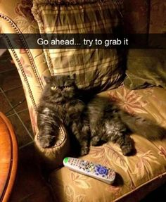 25 Funny Animal Pictures Of The Day   Funny Animals   Daily LOL Pics