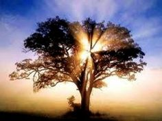 """Oaks of Righteousness-Isaiah 61:3  Rename them """"Oaks of Righteousness""""      planted by God to display his glory."""