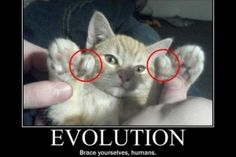 Funny Cat Pictures with Captions 4