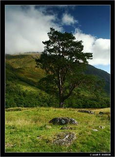 The Ben, Ben Nevis, Scotland Copyright: Peter Damer