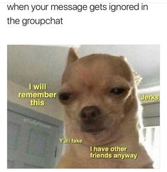 Memes have came into our lives in an enormous way. We've been indulged in those memes so much that we can't keep them out of our lives. To be honest these memes are good enough to spend your time when you have nothing to do. Here are 24 Relatable Memes. Funny Animal Jokes, Funny Dog Memes, Cute Funny Animals, Funny Relatable Memes, Animal Memes, Dankest Memes, Funny Puppies, Animal Humor, Animal Captions