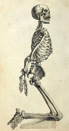 Designersgotoheaven.com -Skeleton bound, tab. X, The Anatomy of the Human Body, 1740.
