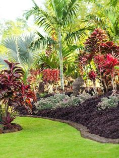 Tropical garden Ideas, tips and photos. Inspiration for your tropical landscaping. Tropical landscape plants, garden ideas and plans. Tropical Backyard Landscaping, Tropical Garden Design, Landscaping Tips, Outdoor Landscaping, Front Yard Landscaping, Outdoor Gardens, Tropical Gardens, Tropical Plants, Tropical Patio