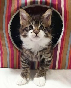 Want to see my new hideout? Cute Kittens, Cats And Kittens, I Love Cats, Crazy Cats, Grand Chat, Maine Coon Kittens, Sleepy Cat, Here Kitty Kitty, Funny Cat Pictures