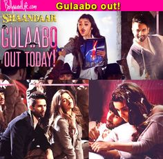 Shaandaar song Gulaabo out! Shahid Kapoor and Alia Bhatt's killer chemistry is on full display! #Shaandaar  #ShaandaarsongGulaabo