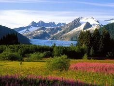 Beautiful, nature, alaska
