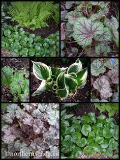 Shade plants with nice textures/colors