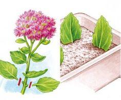 How to cut perennials shrubs and other plants? Potager Garden, Garden Planters, Indoor Planters, Container Gardening, Gardening Tips, City Farm, Diy Garden Projects, Green Garden, Plantation