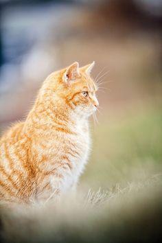 Cat by Kathrin Köhler