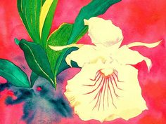 Chondrorhyncha Amazonica – Detail, 1989 | Flickr - Photo Sharing!