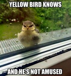 With a yellow bill...