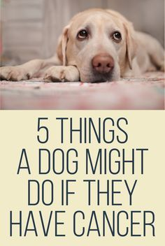 5 Things a dog might do if they have cancer. This is dead on true. Wish I had read this before now