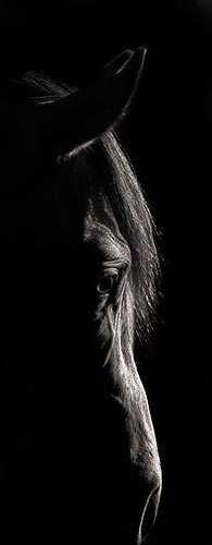 Robert Dawson Photography