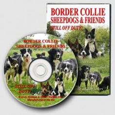 Not all the dogs at Kings Green Farm are sheepdogs, but they all get along. Our latest DVD shows how puppies of any breed will learn from the adults, as well as from each other, and how the adults have a great time together, relaxing after work.