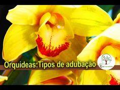 Adubação Orgânica Para Orquídea - YouTube
