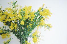 Green Baton //mimosa