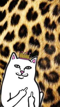 Middle finger cat iPhone wallpaper cut and trendy