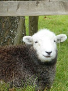 """A Herdy Smile ~ from Herdy UK with the caption """"Thanks to Jeanette Kapustynskyj for the pic."""""""