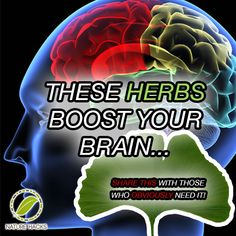 Herbs That Boost Your Brain and Mind