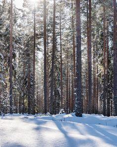 Pidetään metsä metsänä  Kun metsällä on selkeä taloudellinen arvo on muiden maankäyttömuotojen kuten peltoviljelyn vaikeampi vallata siltä tilaa. Globaalisti yleisin syy trooppisten sademetsien pinta-alan pienentymiseen on niiden valjastaminen maatalouden käyttöön. /  Forest is at its best as forest When a forest has a clear economic value its more difficult to occupy it to other uses such as agricultural use. Globally the most common reason for decreasing the size of the rainforests is the…
