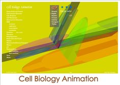 Cell Biology Animation