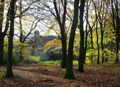 Cottage in the woods by Lancashire Lass Photo's, via Flickr
