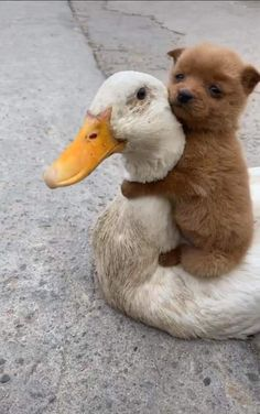 Cut Animals, Cute Wild Animals, Baby Animals Pictures, Cute Animal Photos, Happy Animals, Animals Beautiful, Animals And Pets, Cute Pictures, Funny Animals