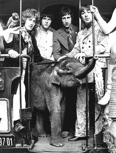 """nobodylv: """" British rock band The Who with a baby elephant, 1960's Photo: Chris Walter """""""