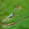 Wikipedia:Imágenes destacadas/Animales - Wikipedia, la enciclopedia libre