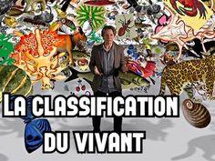 La classification du vivant - Site de opaledefeu !