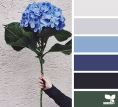 Floral, color pallet, color scheme, color inspiration, color combinations, paint, home, hue, tones, shade, blue, green, gray