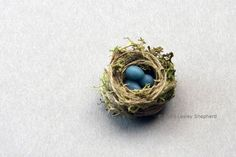 A 1/2 inch miniature model robin's nest made from thread and reindeer moss.