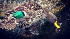 Photo ConchettaT Jacksonville Zoo, Turtle, Fish, Pets, Animals, Turtles, Animales, Animaux, Tortoise