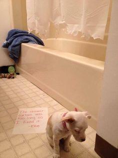Dog shamming....