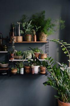 houseplants, tomado shelving, grey wall