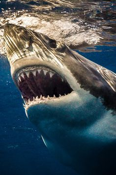 Horror Photography, Underwater Photography, Shark Jaws, Sharks, Shark Pictures, Jaws Movie, Wild Animals Photography, Deep Sea Creatures, Megalodon