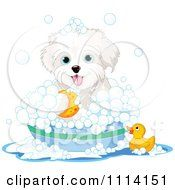 Clipart Cute Bichon Frise Maltese Puppy Bathing With A Duck And Bubbles Royalty Free Vector Illustration