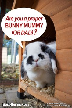 Take our test to see if your a proper Bunny mummy (or dad)!  http://best4bunny.com/12-ways-tell-proper-bunny-mummy-dad/