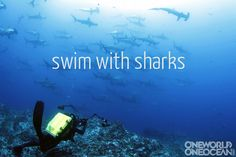 swim with sharks- it's on our to-do list...