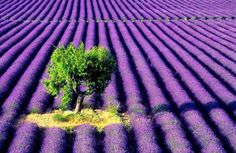 I need to go to here. Provence, France.