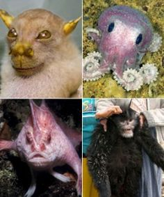 Top 10 Weirdest Animals of The World