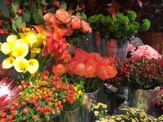 Protea, calla lilies, roses, and mums for sale at a flower market - Photo: Kateryna Kyslyak/Getty Images